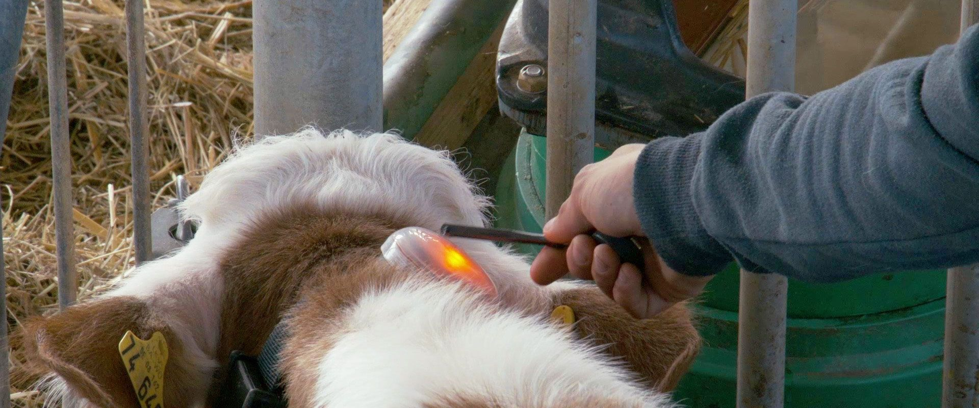 Smart Calf System | Videoproduktion